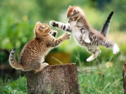 Kitties_small_2