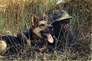 War_dog
